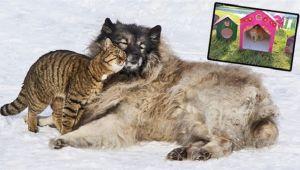 Sokak Hayvanlarını Kıştan Koruyalım!