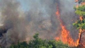 Rize Fındıklı'da Orman Yangını!