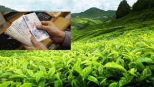 Haziran Ayı Yaş Çay Paraları Ödeniyor