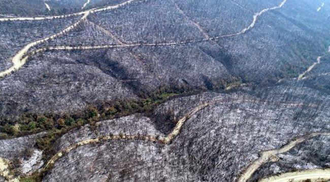 8 Ayda 1944 Orman Yangını Meydana Geldi, 6 bin 492 Hektar Alan Kül Oldu