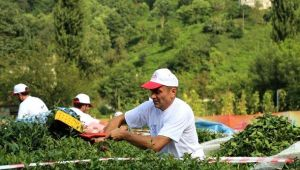 ÇAYKUR, 3. Sürgün Yaş Çay Kampanyasını Açıyor