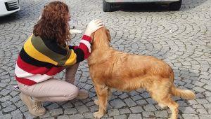 Sokak Hayvanlarına Yönelik Rehabilitasyon Çalışmaları