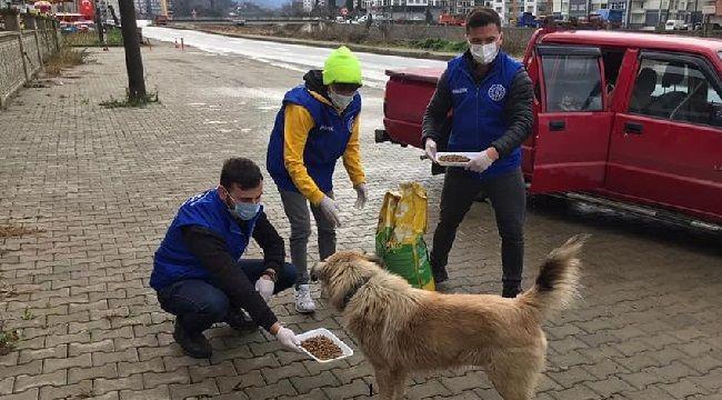 Pazar'da Sokağa Çıkma Kısıtlamasında Sokak Hayvanları Unutulmadı
