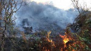 Rize Pazar'da Orman Yangını