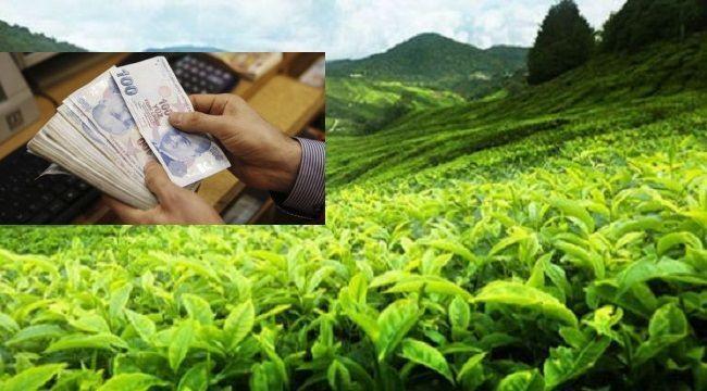 Yaş Çay Destekleme Bedellerinin Ödeneceği Bilgisi