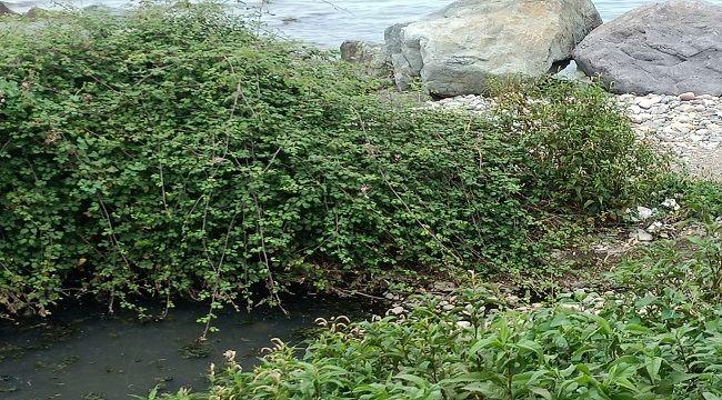 Denize Akan Kanalizasyonun Sorumlusu Kim?